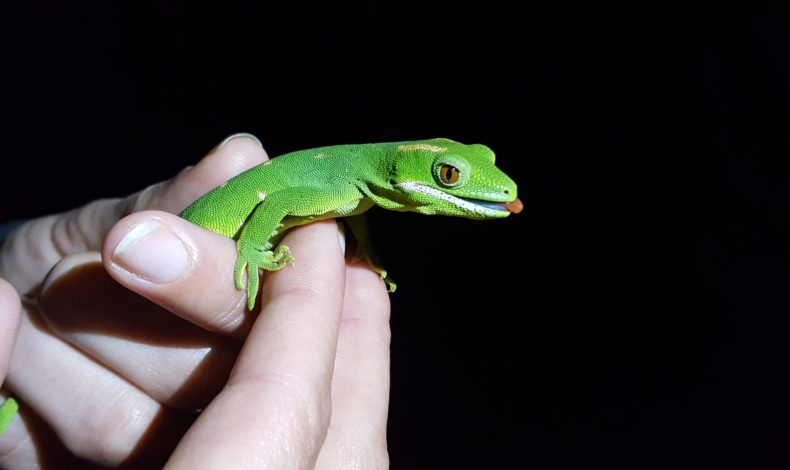 Does your project involve native lizards? Here's what you need to know.