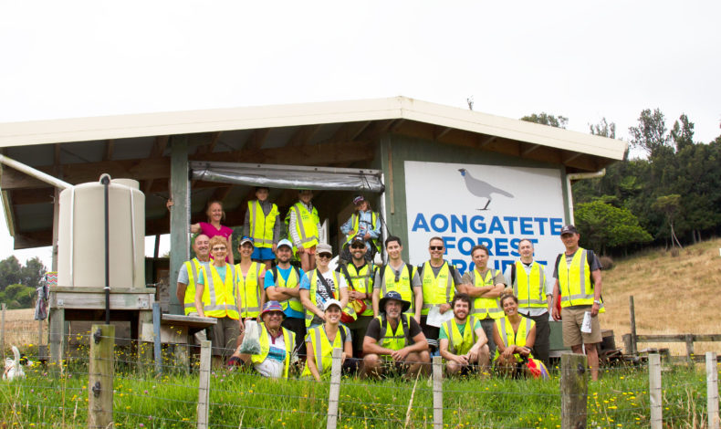 Our Tauranga team volunteers with the Aongatete Forest Project