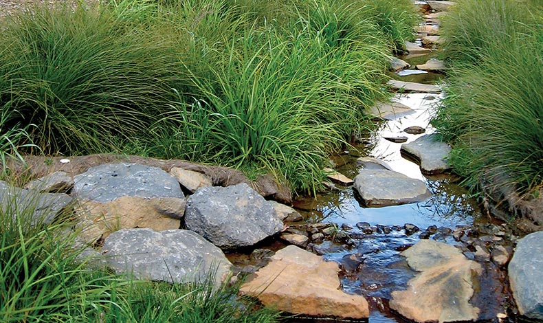 Bayside Stormwater Reserve
