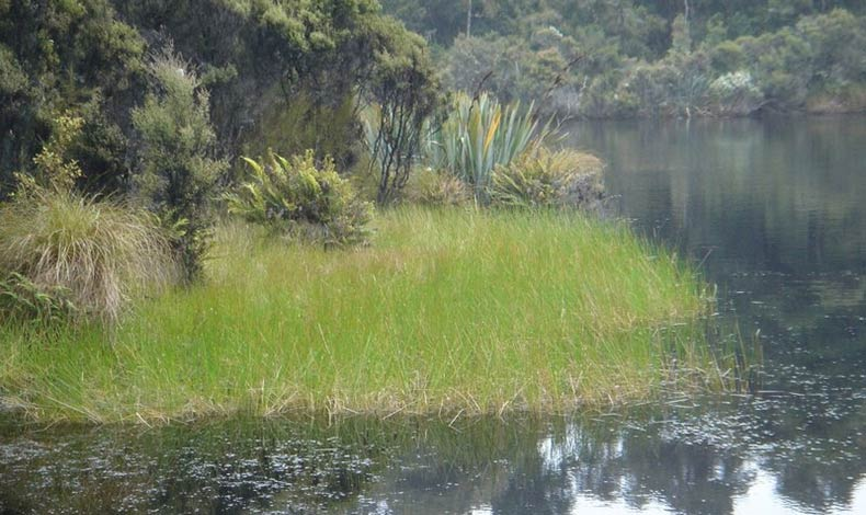 Opinion: Ecologist Sarah Flynn on the question of non-native plants